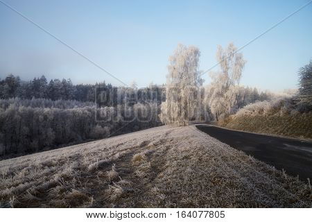 Frozen trees with rime field snow winter forest