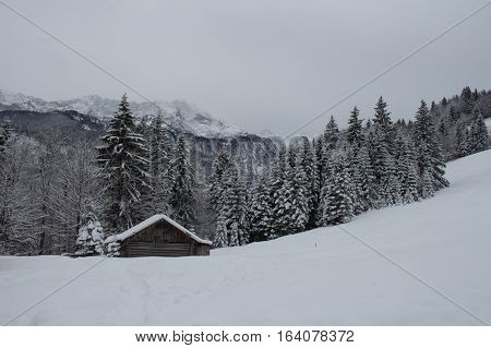 The view of winter landscape with wooden construction trees and mountains on background near Garmisch-Partenkirchen. Germany.