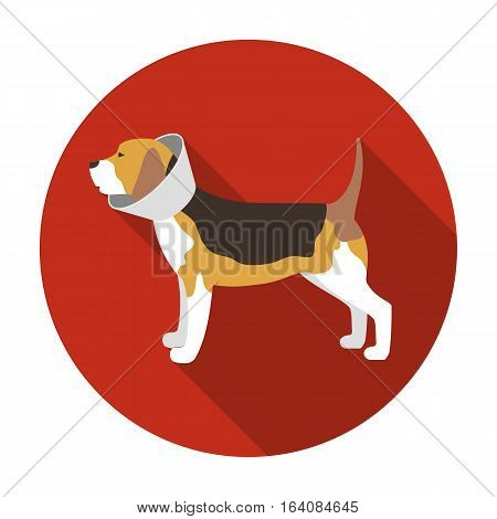 Dog with elizabethan collar icon in flat design isolated on white background. Veterinary clinic symbol stock vector illustration.
