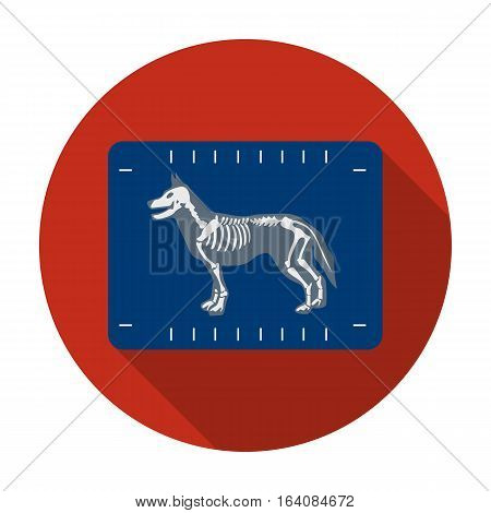 Dog x-ray icon in flat design isolated on white background. Veterinary clinic symbol stock vector illustration.