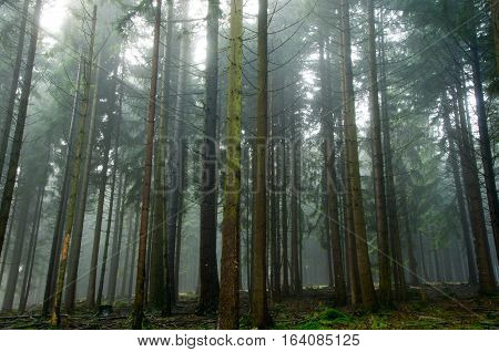 Enchanted trees in foggy forest. Mystical forest in green fog in the morning. Beautiful landscape with trees colorful leaves and fog. Nature. Misty forest with magic atmosphere