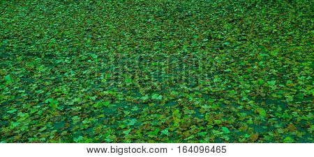 Fallen leaves on the floor as background