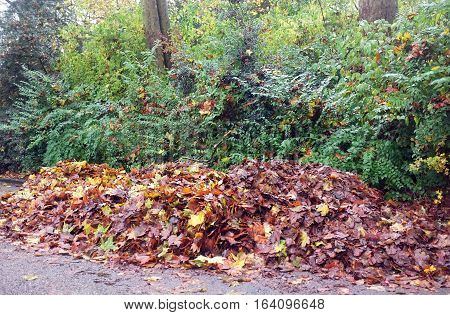 Collected leaves in the park in autumn