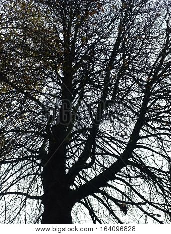 Leafless tree with branches silhouette during autumn