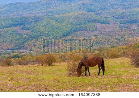 Lonely horse on a summer mountain pasture in Crimea near Demerji