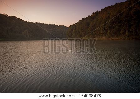 White swan and its swimming at the lake in Pang Ung national park of Mae Hong Son province Thailand