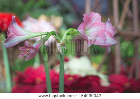 Cluster of pink and white orchids with a bright background,
