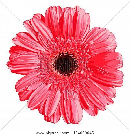 Pink gerber. Vector illustration. Decoration element. Style.