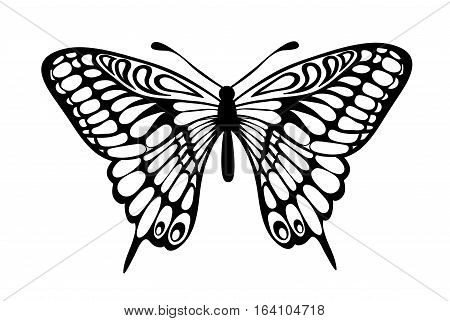 Beautiful black and white butterfly isolated on white