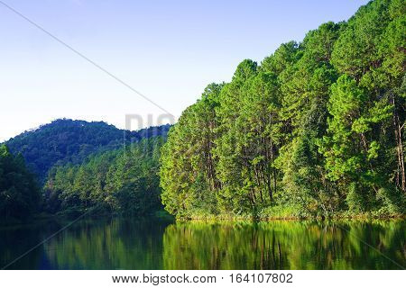Reflection of pine trees in Pang Oung Lake (Pang Tong reservoir) Mae Hong Son Thailand