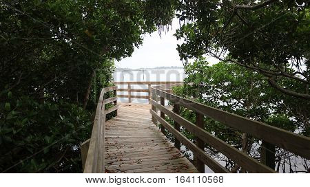 A walkway extends over a group of beautiful mangroves.