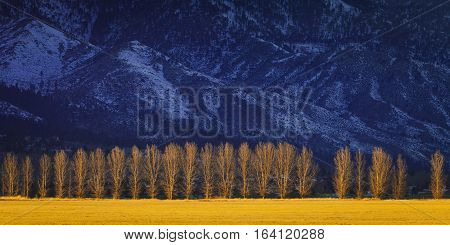 Treeline At Sunset With Snowy Mountains In The Background. Carson Valley, Nevada