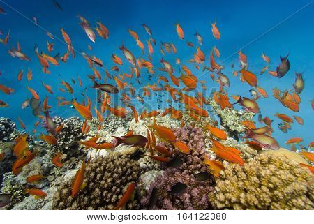 Coral Fish Reefscape