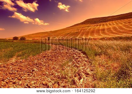 Pasture on the Hill in Sicily Italy at Sunset
