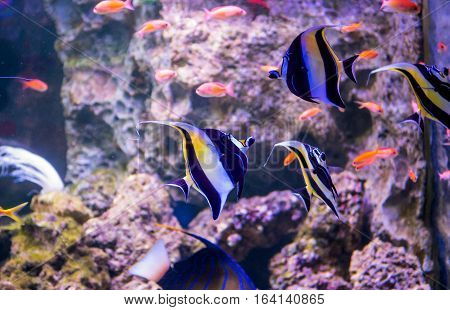 The Aquarium Inhabitants Of The Underwater World