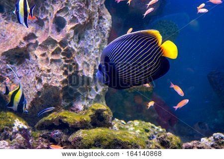 The Aquarium Inhabitants Of The Underwater World