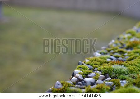 Moss covered stone hedge with blurry background