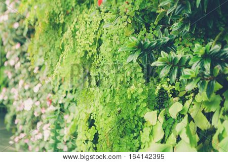 green tropical decorate plant garden fresh nature background