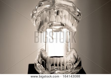 False teeth sample for dentists. No people