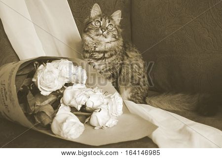 Cat With Bouquet In Vintage.