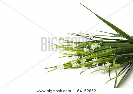 Artificial White Wild Flowers Isolated