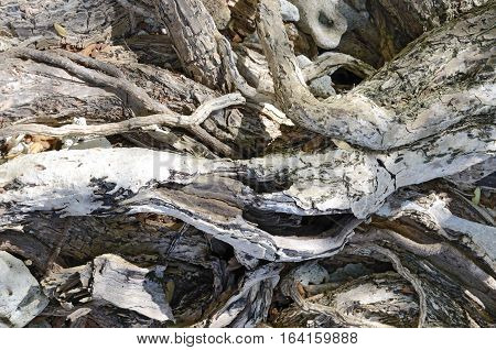 close up background of gray plant roots