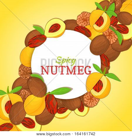 Round white frame on spicy nutmeg diagonal composition background. Vector card illustration. Nuts nutmeg fruit in shell, whole, shelled, leaves, appetizing looking for packaging design of healthy food