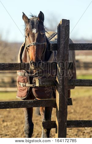 Sunny winter day on a horse farm horses wearing blankets. Check out my another equine photos please