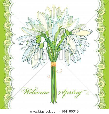 Vector bouquet with outline Snowdrop flowers or Galanthus and lace in pastel colors isolated on white. Greeting card with ornate floral elements for spring design. Spring flower in contour style.