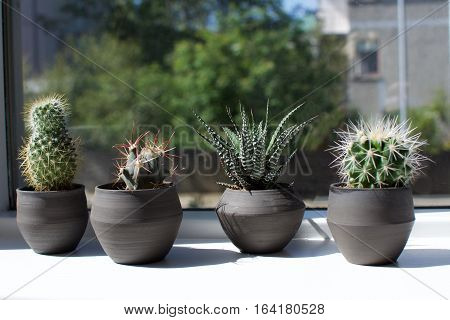Group of succulents sitting in windowsill with natural light
