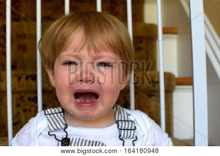 adorable toddler boy child crying from temper tantrum