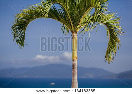 palm tree and blue sky in Asia.