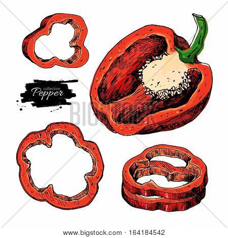 Pepper hand drawn vector set. Vegetable artistic style object, half and slices. Isolated bell pepper. Detailed vegetarian food drawing. Farm market product. Paprika icon