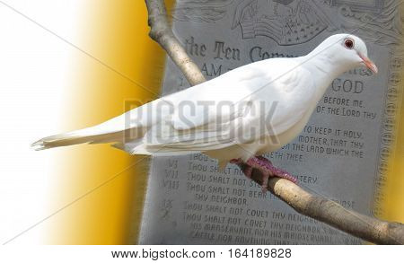 White dove perching on a stick in front of the 10 commandments
