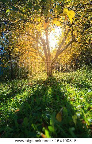 Sunlight In Autumn Garden