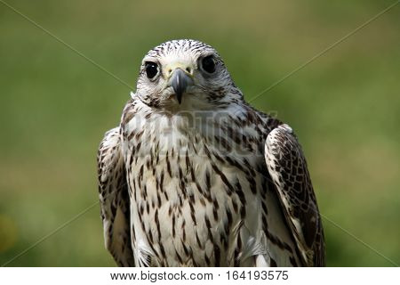 Bird of prey sitting on a perch