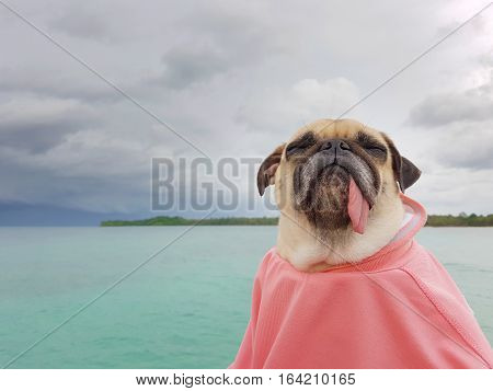 Cute pug dog sleep rest by close eyes and tongue out on the sea beach ocean feel comfortable and wrapped body by human cloth