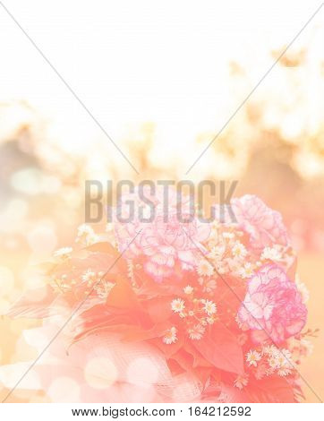 Soft focus of Bouquet of fresh pink white Carnation roses in the sunset (dreamy concept)