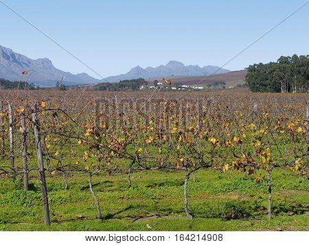 Stellenbosch, Wine Farm Cape Town South Africa 12kkjh