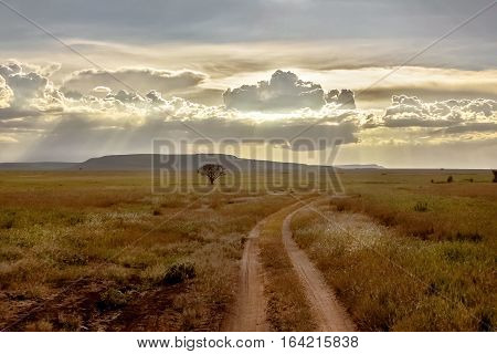African savannah at sunset. Lonely tree and road. Tanzania.