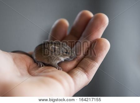 little mouse in my hand in daylight