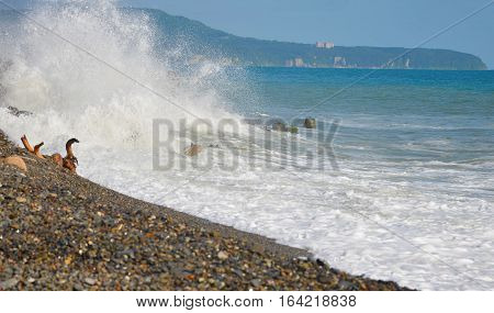 big waves on the sea on the stone coast in summer