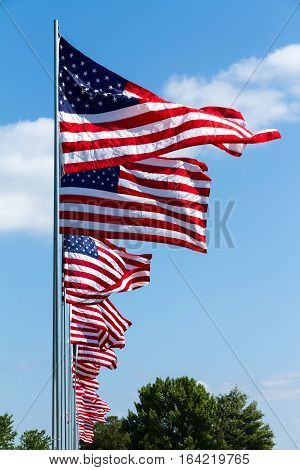 Multiple United States flags flying on a holiday.