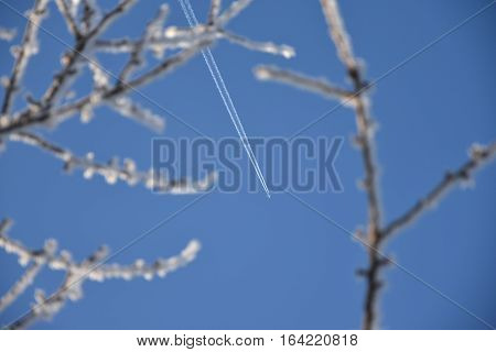 Frosted branches blue sky background with the aircraft. Aircraft.