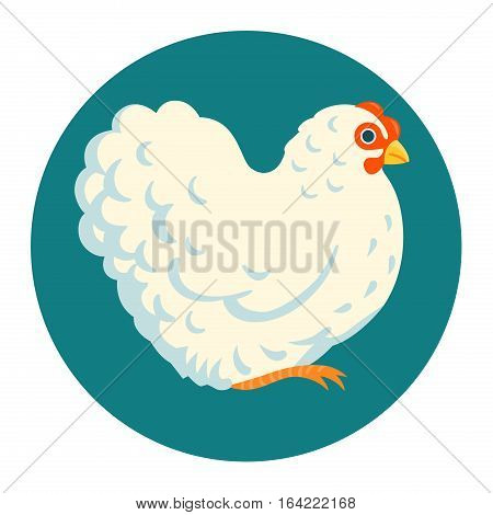 White fluffy chicken vector illustration cartoon style
