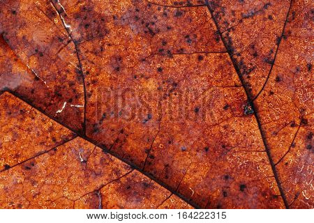 The interesting texture or background reminding leather of a dragon