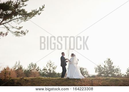 Amazing Young Wedding Couple In Love At Winter Frost And Sunny Day Background Pinewood