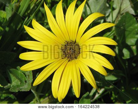 Yellow Flower With Green Back Ground Foliage 10ads