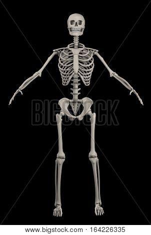 Illustration of full human skeleton over black