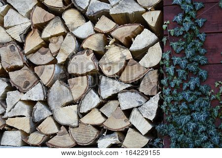 Leveled chipped wood in the woodshed. On the wall of the woodshed ivy. Heating season. Wood.